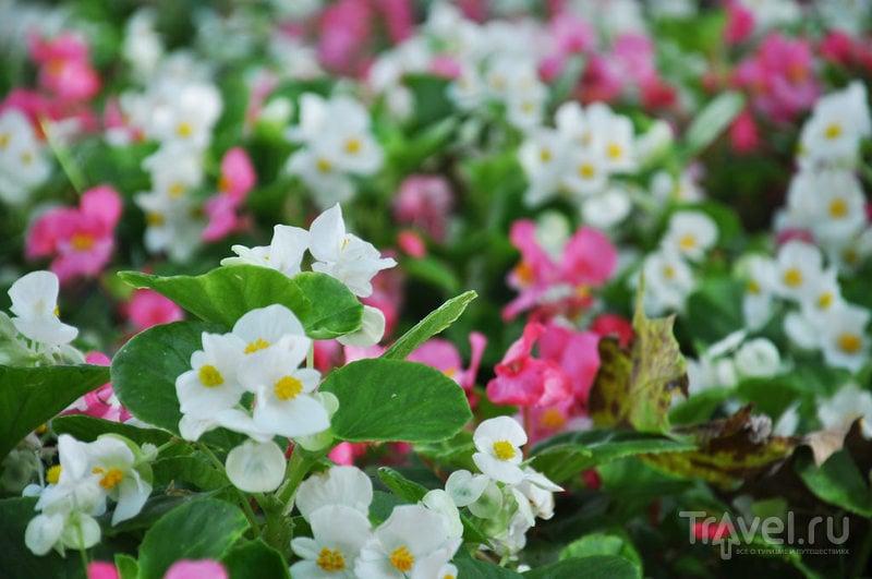 Гюльхане парк роз / Турция