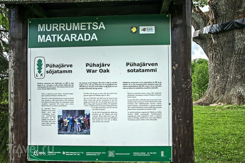 Пюхаярвеский Дуб Войны / Эстония