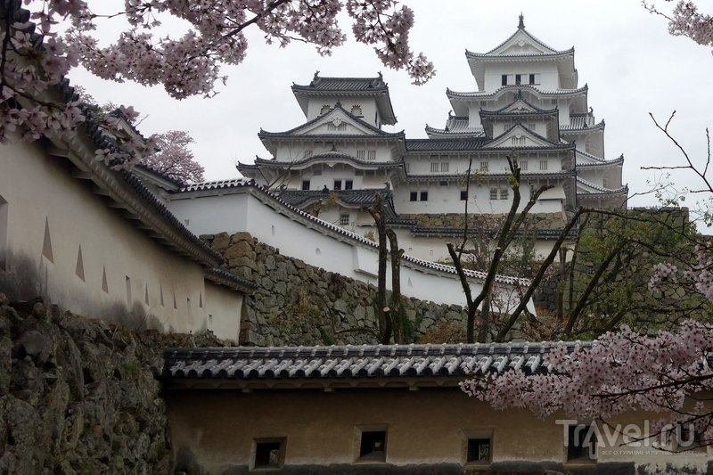 Япония, замок Химэдзи  в сезон цветения сакуры / Фото из Японии