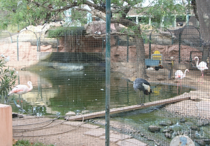 """Марокко, Агадир: Зоопарк """"Valle des oiseaux"""" (Долина птиц) / Марокко"""