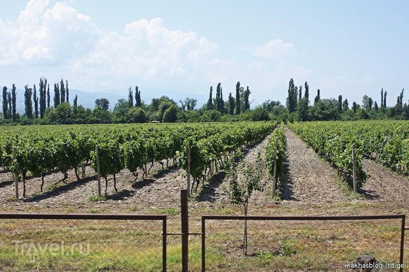 Кварели и винный тур / Фото из Грузии