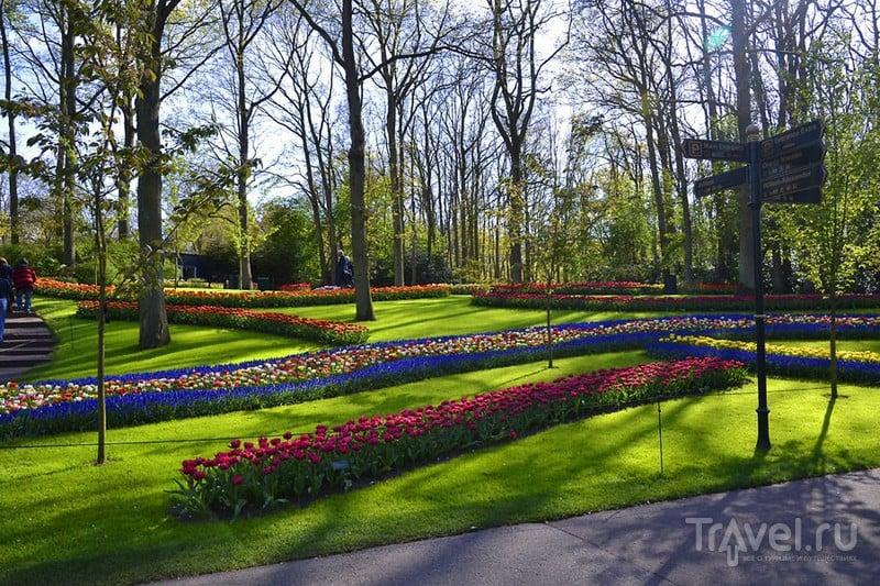 Королевство цветов - Кёкенхоф / Фото из Нидерландов