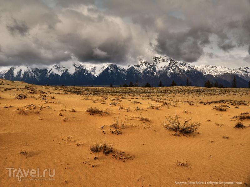Чарские пески: уютная  пустыня в Сибири / Фото из России