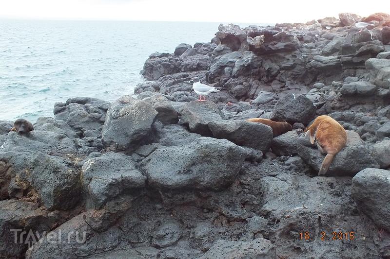 Галапагосы. Остров Северный Сеймур. Птицы / Эквадор