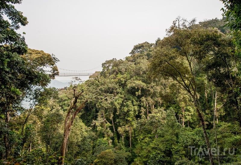 Руанда. Парк Ньюнгве и не самая удачная встреча с шимпанзе / Руанда