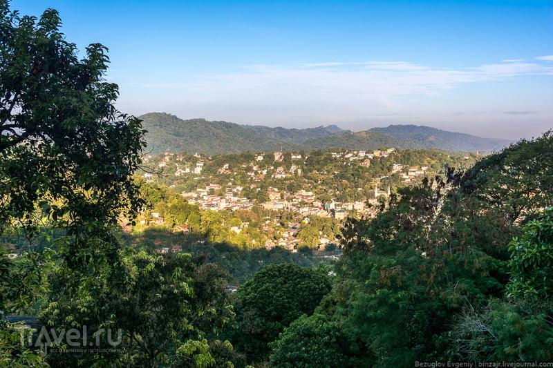 Шри-Ланка. Королевский ботанический сад / Фото со Шри-Ланки
