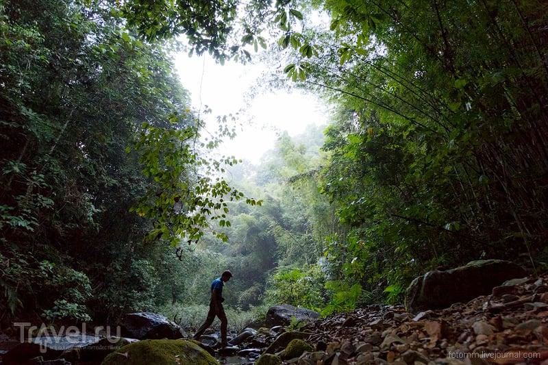 Таиланд. Заблудился / Фото из Таиланда