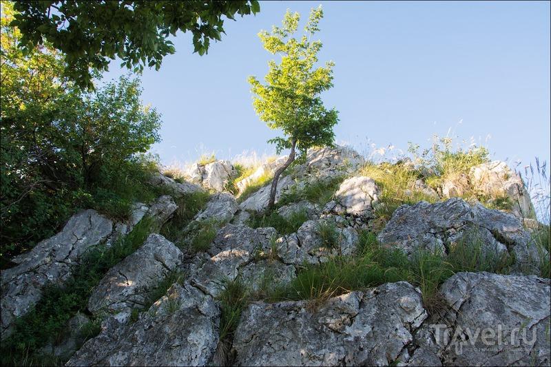 Треккинг на гору Барро - подробности / Фото из Италии
