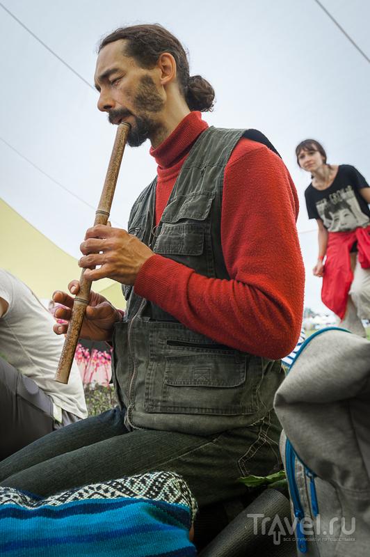 Дикая мята - музыка для души / Фото из России