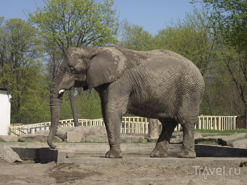Варшава: зоопарк / Польша