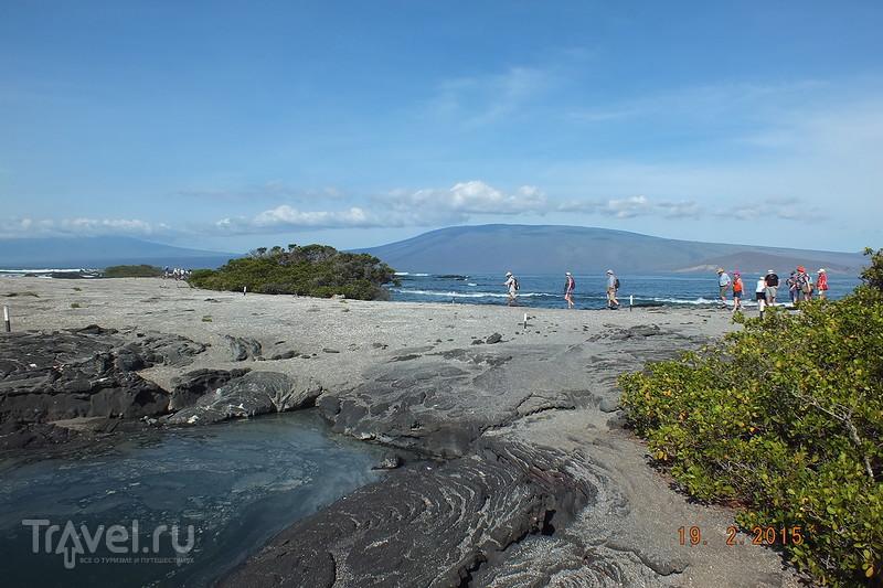 Галапагосы. Остров Фернандина / Эквадор