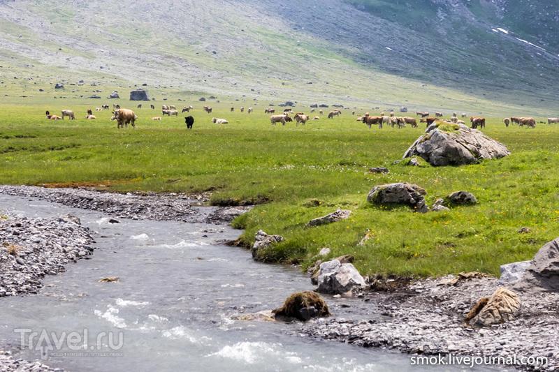 Швейцарские альпы - спасение от городской жары / Фото из Швейцарии