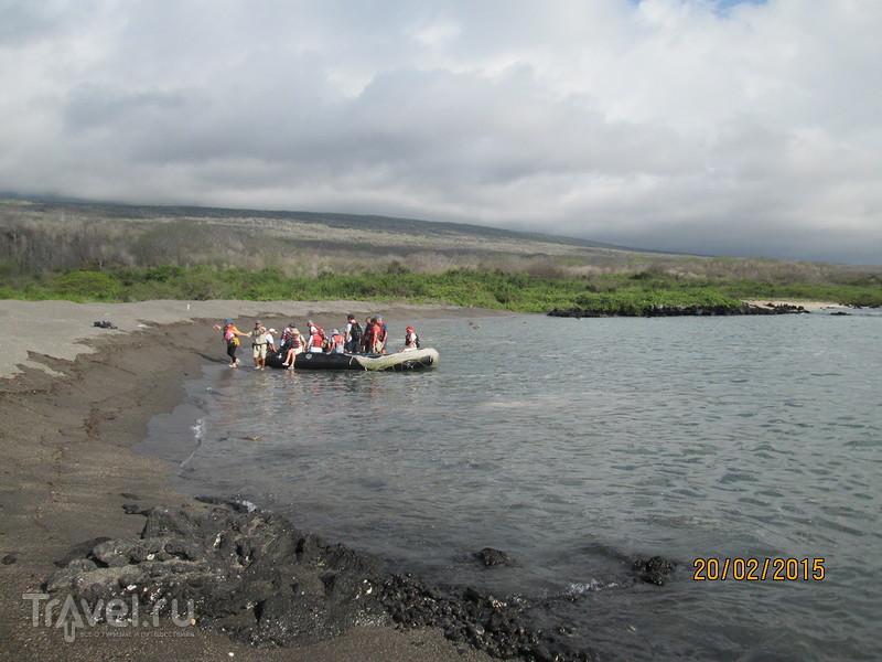 Галапагосы. Остров Исабела. Бухта Урбина / Эквадор
