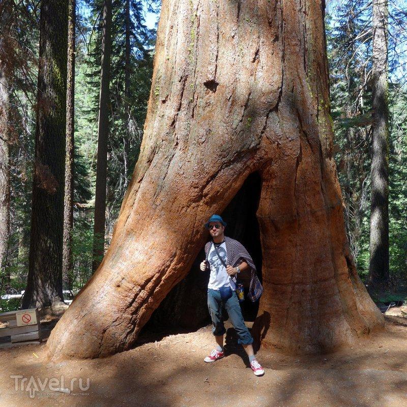 США: Секвойи - гиганты из древнего мира / США