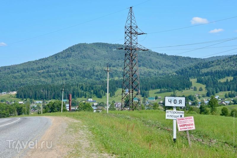 Алтайское междуречье / Фото из России