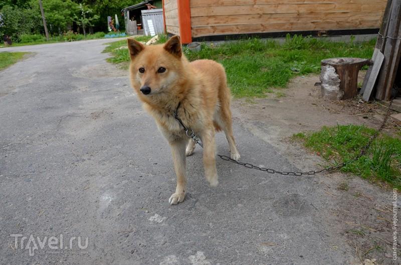 Карельское путешествие. Лахденпохья, Рускеала и Ляскеля / Россия