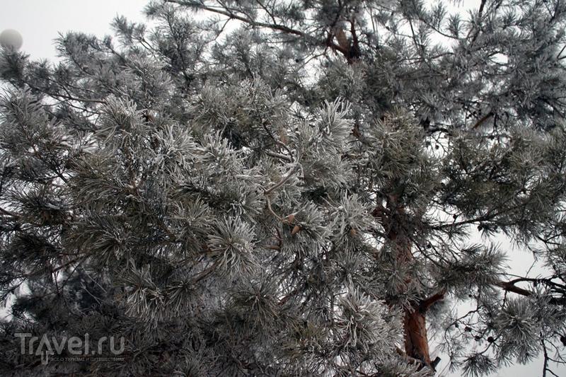 Китай: Гирин и его зимние деревья / Китай