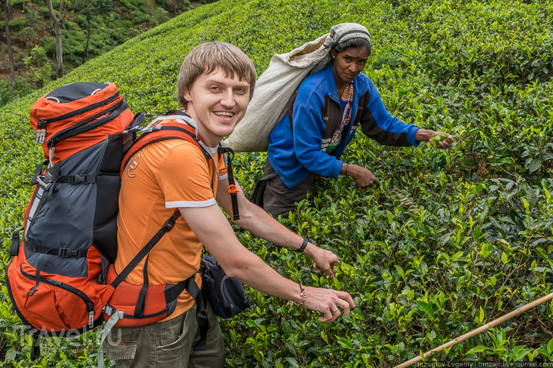 Шри-Ланка. 2015. По дороге к Нувара-Элии / Фото со Шри-Ланки