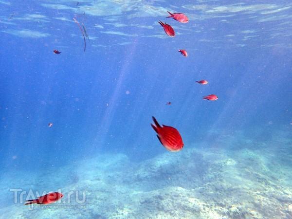 Подводная Мальта / Мальта