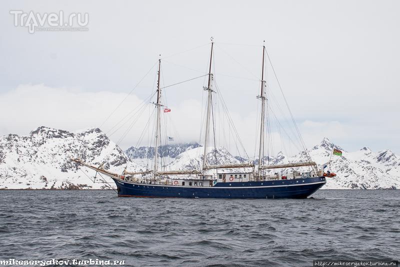 Сноудайвинг в Хамбургерзунде / Фото из Гренландии