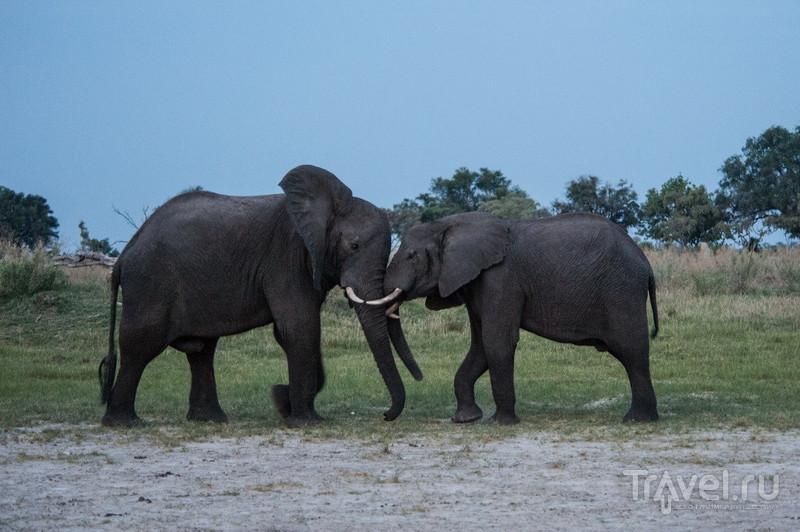 Один день на сафари в Ботсване / Фото из Ботсваны
