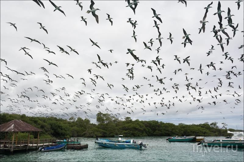 Острова, изменившие мир: зачем ехать на Галапагосы / Фото из Эквадора