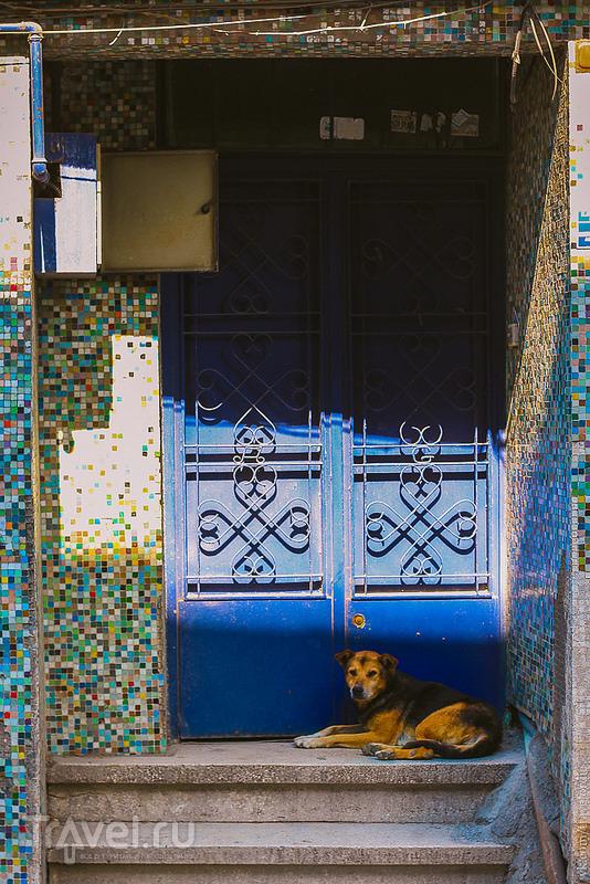 Типичный Стамбул. Старый Город, Гранд Базар, подземная мода, ниндзя и котики / Фото из Турции