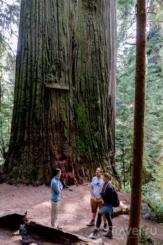 Cказочный домик, огромные деревья, индейцы племени Юрок и живописное побережье северной Калифорнии / США