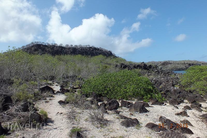 Галапагосы. Остров Сан-Кристобаль. Пляж Playa Baquerizo / Эквадор