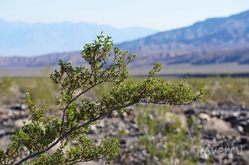 Долина Смерти (Death Valley) Сентябрь 2012 / Фото из США
