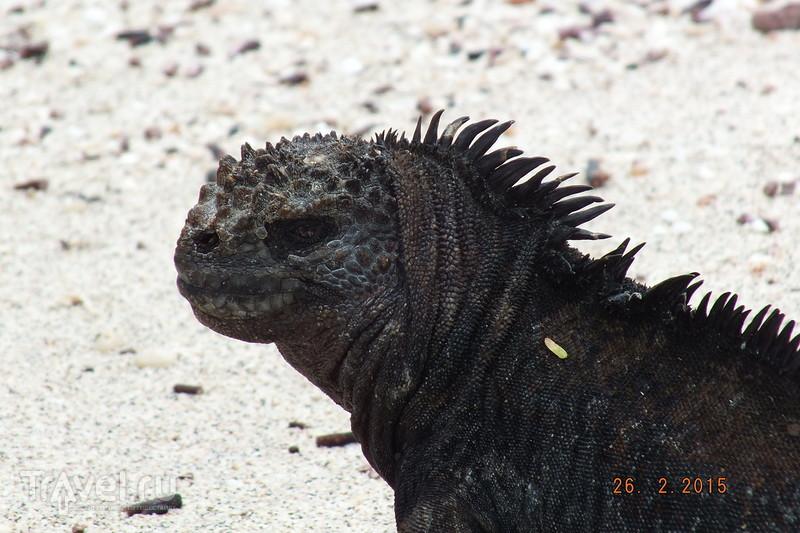 Галапагосы. Остров Сан-Кристобаль. Пляж Playa Punta Carola / Эквадор