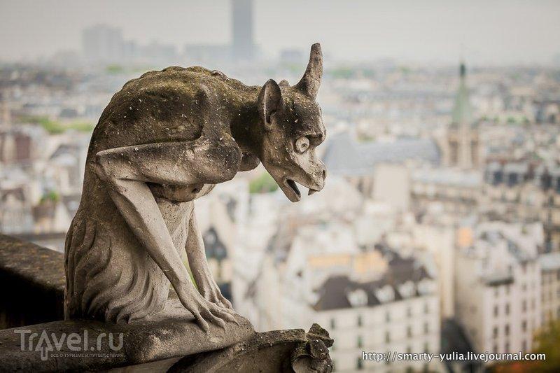 Париж с крыши Нотр Дама / Фото из Франции