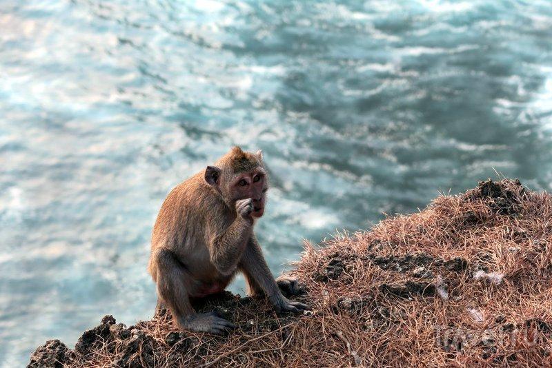 Индонезия: Бали - туристический ад и обезьянки на закате / Индонезия