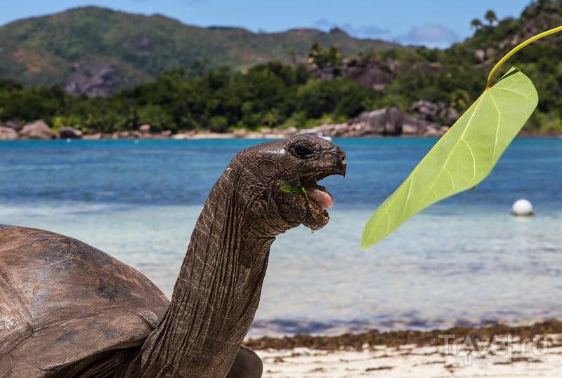 изображение фотография страна для туризма Сейшелы