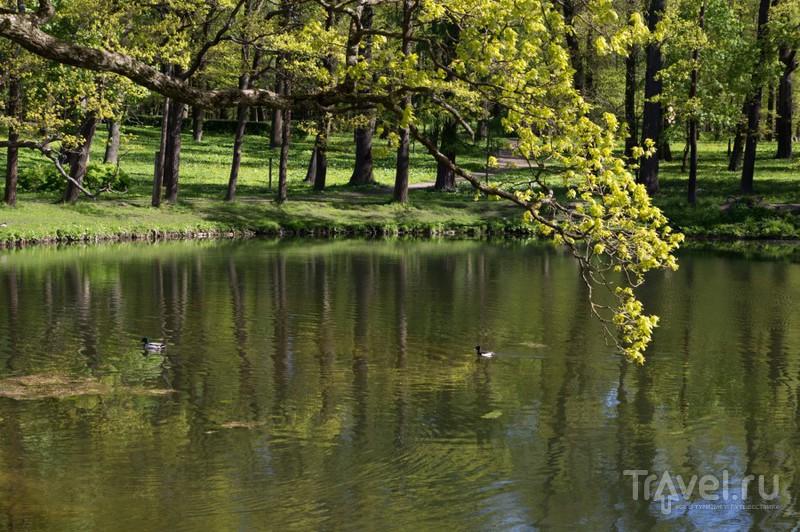 Гатчина: вода и камни / Фото из России