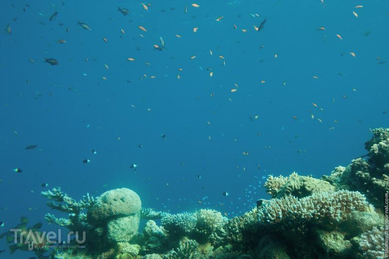 Подводная обсерватория в Эйлате / Фото из Израиля
