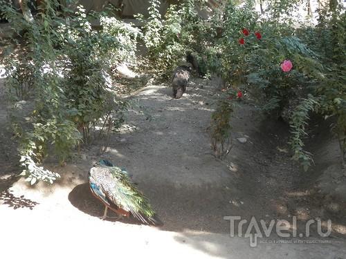 Загородная резиденция Бухарского эмира / Узбекистан