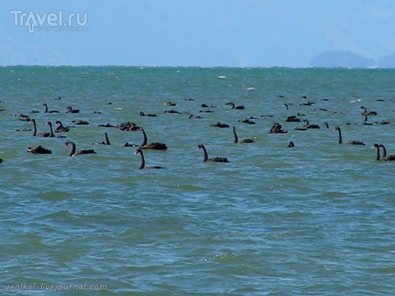 В стране антиподов. Песчаные дюны мыса Феруэлл / Новая Зеландия