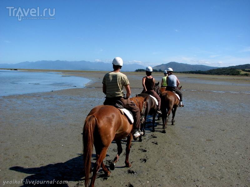 В стране антиподов. По дну морскому на конях верхом / Новая Зеландия