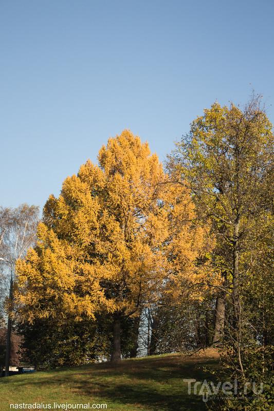 Осень в Кузьминках / Россия