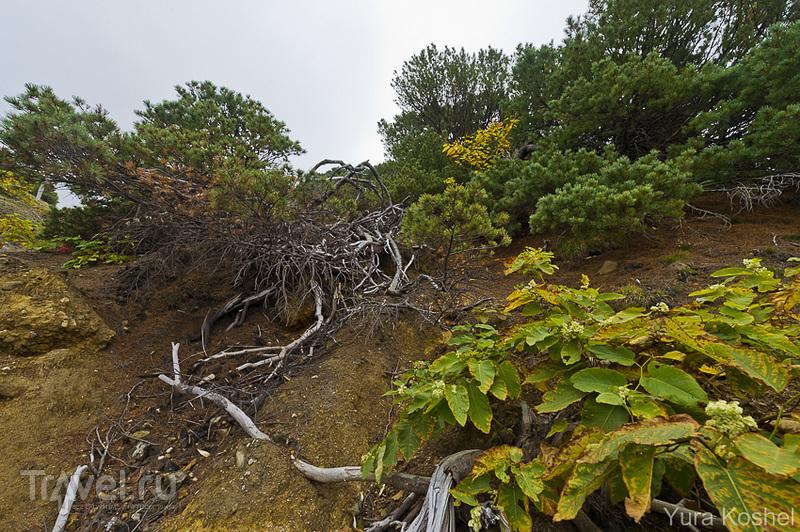 Остров Кунашир. Вулкан Менделеева / Фото из России