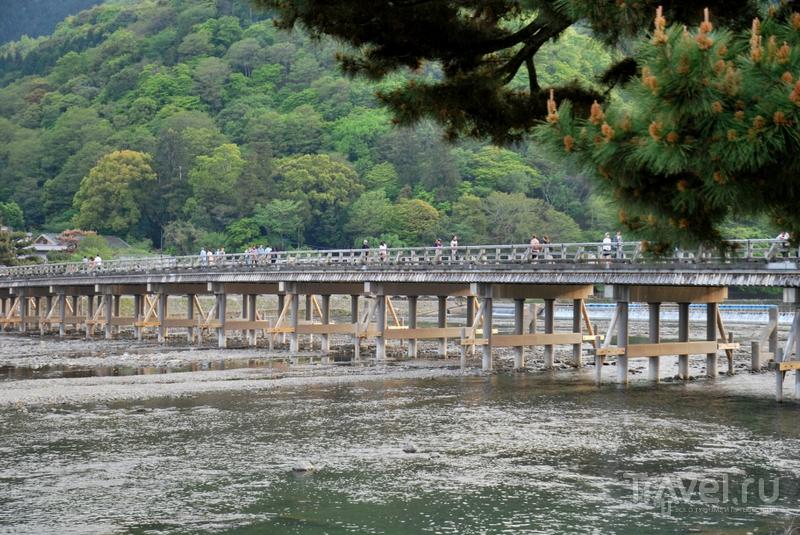 Киото: о бамбуке, романтическом поезде и бумажных карпах / Япония