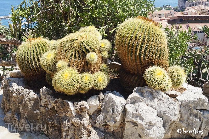 Экзотический парк в Монако / Фото из Монако
