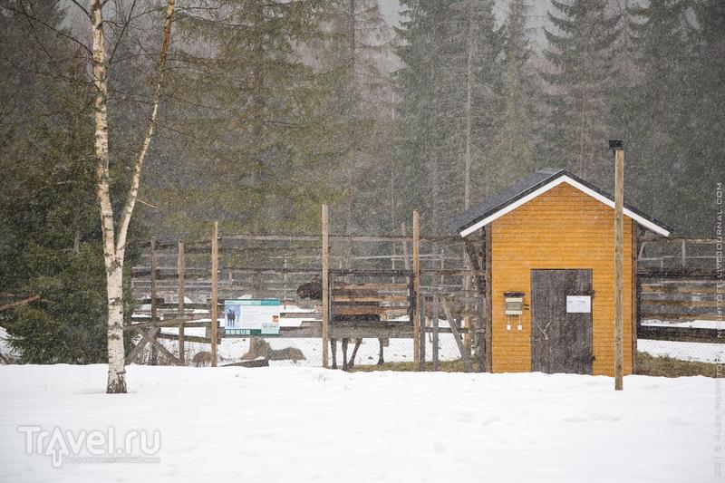 Лосиное поместье в Ямся. Химос. Финляндия / Фото из Финляндии