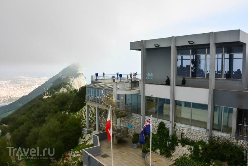Главные обитатели Гибралтарской скалы / Фото из Гибралтара