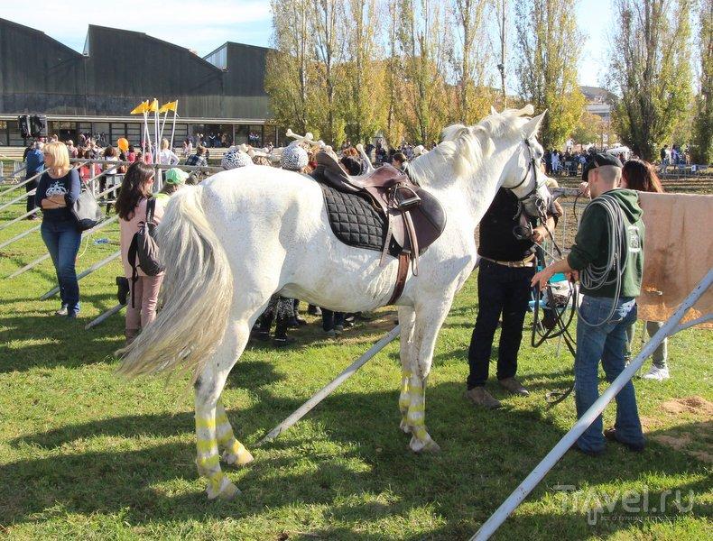 Каталония. Смешались в кучу кони, люди / Фото из Испании