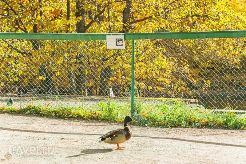 Ломоносов. Осенний марафон 2015 / Фото из России