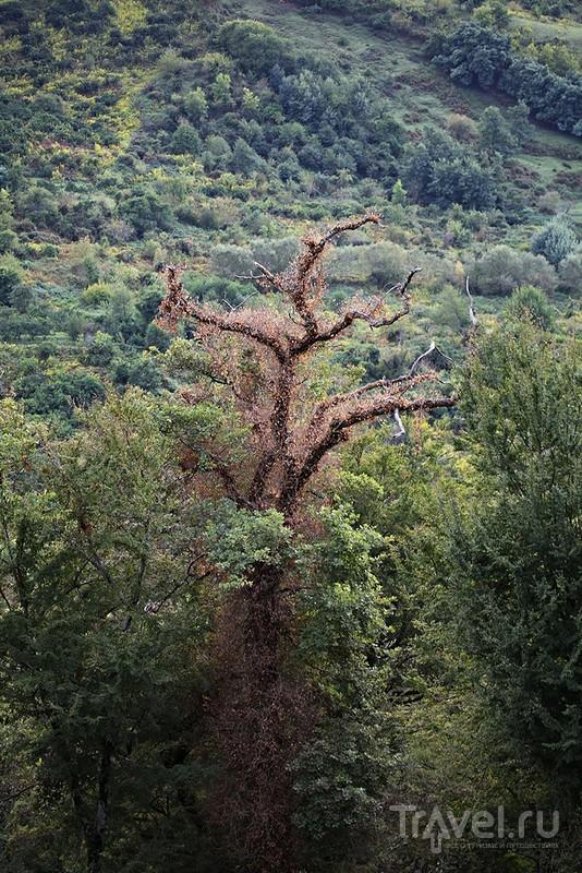 Апсны - древняя Анакопия... / Фото из Абхазии
