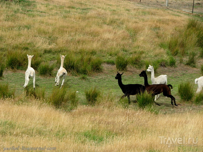 В стране антиподов. Олений парк (Deer Park) / Фото из Новой Зеландии