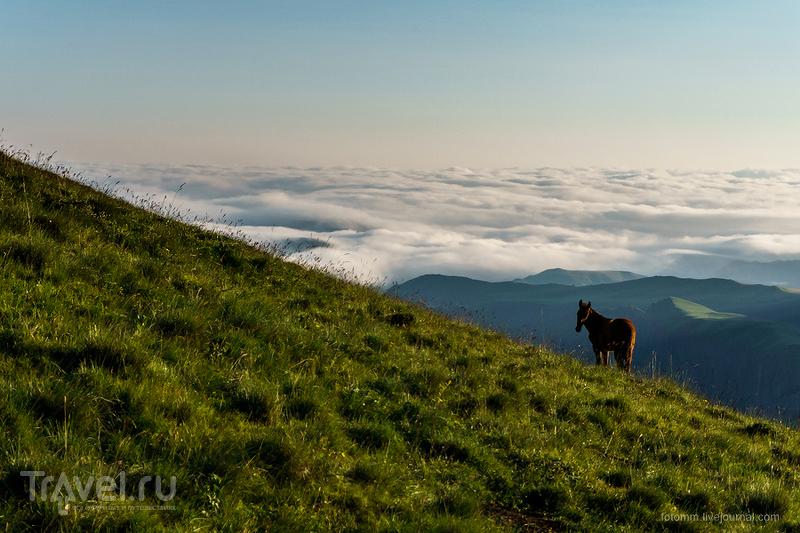 Кавказ. Утренние кони / Фото из России